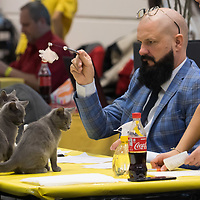Judge inspects cats at the international cat show in Budapest, Hungary on Nov. 17, 2019. ATTILA VOLGYI