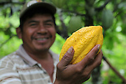 Justino Peck, 49, Mopan Mayan cacao grower from San Jose, Toledo, holds a recently harvested cacao pod from his personal lot. Mr. Peck served as TCGA chairman from 1992 to 1997, once again from 2003 to 2010, and is currently the TCGA's liaison officer. Toledo Cacao Growers' Association (TCGA), San Jose, Toledo, Belize. January 25, 2013.