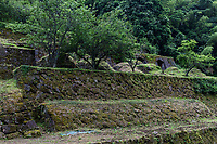 Shimogawara Smelting Ruins at Iwami Ginzan - At one point, Japan produced a third of the world's silver, and most of this was mined by at Iwami Ginzan. Silver from Iwami was exported overseas and it played a large role in supporting trade between Europe and Asia.