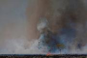 Janauba_MG, Brasil.<br /> <br /> Incendio proximo as margens  BR 122 em Janauba, Minas Gerais.<br /> <br /> Fire near the highway BR 122 in Janauba, Minas Gerais.<br /> <br /> Foto: LEO DRUMOND / NITRO