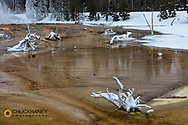 Bacteria Mat in winter in Yellowstone National Park, Wyoming, USA