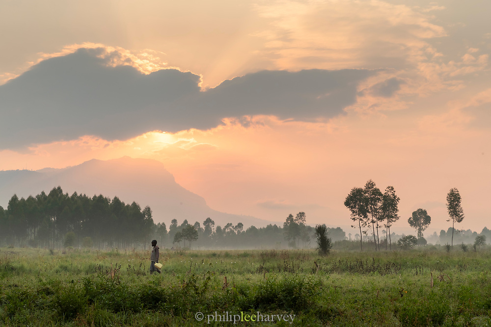 Boy carrying water container on field at sunset, Musoto, Mbale, Uganda