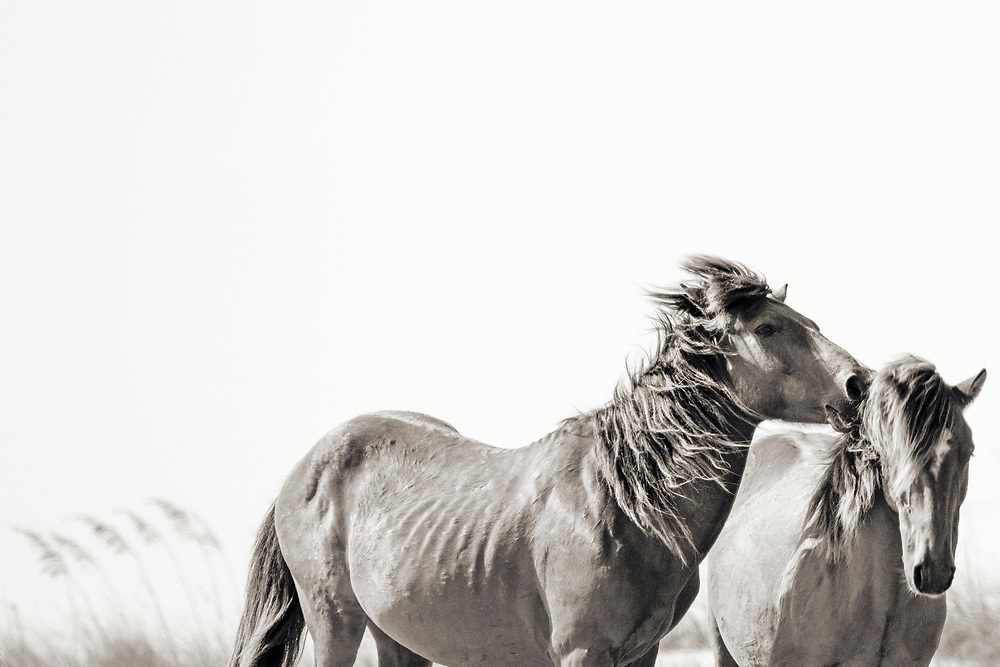 """""""To love at all is to be vulnerable"""" ~ C.S. Lewis<br /> <br /> Tracie Spence's fine art photography series of The Spanish Wild Mustangs."""