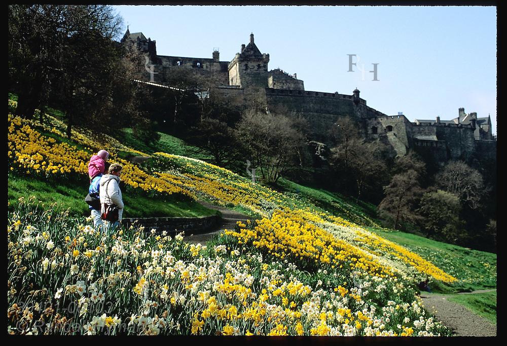 Family walks thru daffodil fields of Princes Street Gardens below Edinburgh Castle in springtime. Scotland