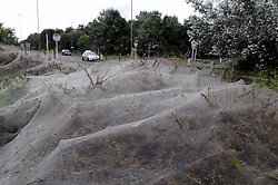 © Licensed to London News Pictures. 30/08/2012. A tangled Caterpillar Webb outside Belmarsh Prison. At twenty feet long and five feet wide, this blanket opposite Belmarsh Prison on Western Way, Thamesmead is the silk webbing left behind by caterpillars to protect them from predators..Photo credit : Grant Falvey/LNP