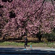April 28, 2020 Coronavirus Prospect Park Edits