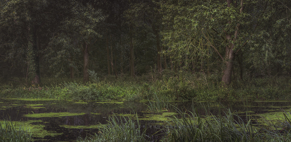 From a wander along the River Waveney one morning last month