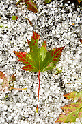 Autumn meets winter. (Mike Siegel / The Seattle Times)
