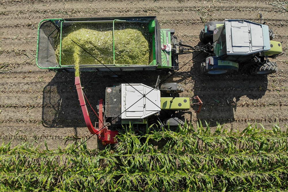 18.09.2019; Rudolfstetten; Inland - Landwirtschaft;<br /> Mit zwei Traktoren wir ein Maisfeld abgeerntet. <br /> (Andy Mueller/freshfocus)