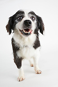 Senior dog photographed while waiting for adoption.  Pet photography by Michael Kloth.