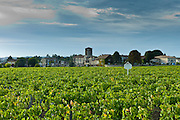 Chateau Canon vineyard at St Emilion, Bordeaux region of France