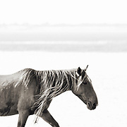 """""""The unexamined life is not worth living"""" ~ Socrates<br /> <br /> Tracie Spence's fine art photography series of The Spanish Wild Mustangs."""
