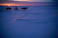 Nenets Reindeer herdsmen, Kánin Peninsula, Russia
