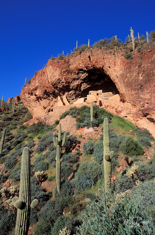 Morning light on Saguaro Cactus and the Lower Tonto Ruins (Salado Indians), Tonto National Monument, Arizona