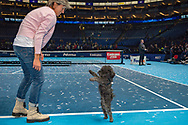 Mother (Irina Zvereva) of Alexander 'Sasha' Zverev of Germany with his pet dog during the Nitto ATP Tour Finals at the O2 Arena, London, United Kingdom on 18 November 2018. Photo by Martin Cole