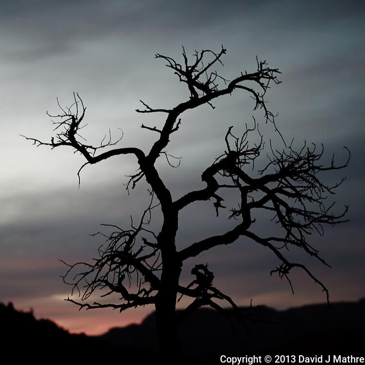 Creepy Tree at Dusk in Sedona, Arizona. Image taken with a Nikon 1 V2 camera and 32 mm f/1.2 lens (ISO 200, 32 mm, f/1.2, 1/100 sec). Nikonians ANPAT-13 Day 2.