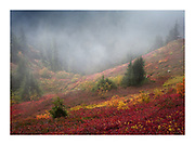 Atmospheric view on mountain hillside covered in colourful autumnal foliage in North Cascades National Park, Washington
