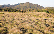 Montane grassland environment Horton Plains national park, Sri Lanka, Asia