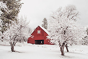 Heart K Barn and Fruit Trees in Fresh Snow, Genesee Valley, Winter, Red Barn, Western Gable Barn, mountain valley living