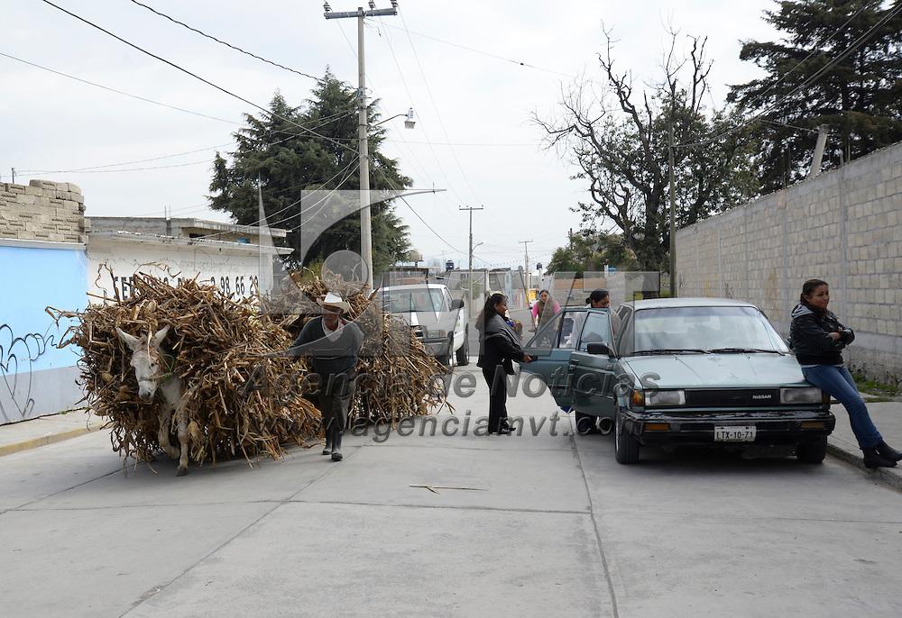 Zinacantepec, México.- Algunos campesinos trasladan el zacate que se encontraba en sus tierras de cultivo y poder aprovecharlo como alimento para su ganado y así limpiar la tierra la tierra para el siguiente periodo agrícola. Agencia MVT / Crisanta Espinosa