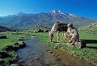 Pakistan - Le Polo des Rois - Tournoi de Polo le plus haut du monde au col de Shandur à 3800 m d'altitude entre les anciens royaumes de Chitral et de Gilgit - Palfrenier d'un participant au tournoi // Pakistan, Khyber Pakhtunkhwa, polo tournament at Shandur Pass at an altitude of 3800 m between Chitral and Gilgit team