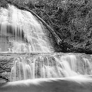 Golden Falls Spring - Big Basin Redwoods State Park, CA - Black & White