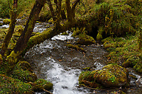 Moss and lichens besides a stream as part of Tree biodiversity in Fall colours, Humid montane mixed forest, Laba He National Nature Reserve, Sichuan, China