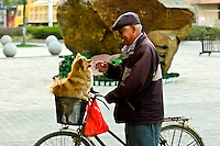 Dog in a bicycle basket with it's owner, Zhenjiang, China