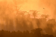 View to the Argentinian side of the Iguazu Falls with black vultures (Coragyps atratus) on a tree at sunset, Brazil