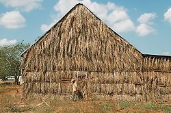 Thatched tobacco drying barn near Vinales; Pinar Province; Cuba,