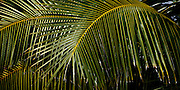 Palm fronds design