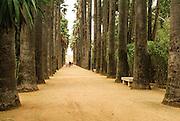 Palm tree avenue, Jardin Jnan Sbil park Fes, Morocco