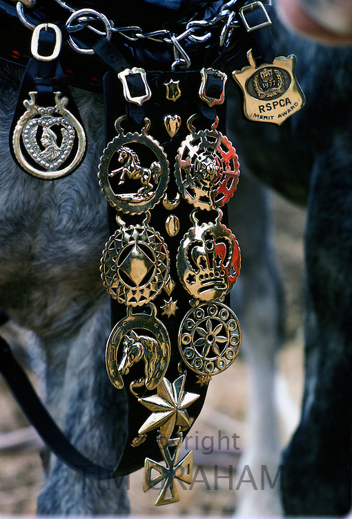 Horse Brasses on a Shire Horse, England, United Kingdom.