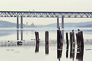 Newburgh, New York - Two cormorants and a seagull perch on piers in the Hudson River on Feb. 20, 2007. The Newburgh-Beacon Bridge is in the background.