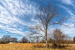 A bare tree stands after a long winter, ready to be revived by spring and gather it's former vibrant green glory