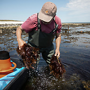 Bjarne Ottesen samler tang ved Jyllands østligste kyst, ved Fornæs Fyr. Han startede Nordisk Tang med sønnen i 2014.  Bjarne Ottesen collects seaweed by the easternmost coast of Jutland, Denmark. Bjarne Ottesen is the co-founder of Nordisk Tang, which is a family run business. Ten years ago Bjarne was introduced to the idea that seaweed can be the answer to many current environmental issues by Michael Gorbachev. He and Gorbachev were both part of a Green Cross conference in South Africa where Bjarne first realised the huge potential to solve many of the world's food production issues by using seaweed.