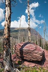 Burned Over Forest, Glacier National Park, Montana, US