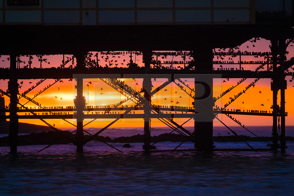 © Licensed to London News Pictures. 19/01/2019. As the sun sets dramatically over Aberystwyth pier at the end of a cold January day, flocks of tens of thousands of tiny starlings return from their daily feeding grounds to roost for the night on the forest of cast iron legs underneath the Aberystwyth's Victorian seaside attraction. Aberystwyth is one of the few urban roosts in the country and draws people from all over the UK to witness the spectacular nightly displays between October and March. Photo credit: Keith Morris/LNP