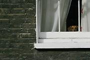 Dog and window, Knightsbridge London, UK.