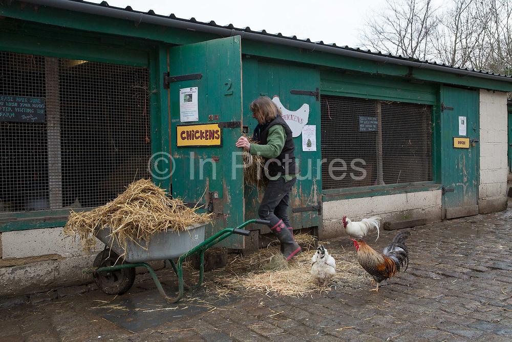 Hackney City Farm in East London on 9th January 2016 in East London, United Kingdom