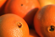 Close up selective focus photograph of a group of Navel Oranges