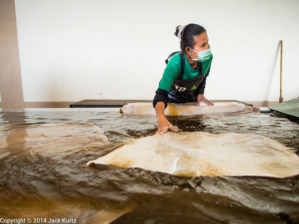 """15 DECEMBER 2014 - KLAENG, RAYONG, THAILAND: A worker rinses off rubber sheets at Supark, a rubber processing plant in Klaeng, Thailand. Thailand is the second leading rubber exporter in the world. In the last two years, the price paid to rubber farmers has plunged from approximately 190 Baht per kilo (about $6.10 US) to 45 Baht per kilo (about $1.20 US). It costs about 65 Baht per kilo to produce rubber ($2.05 US). Prices have plunged 5 percent since September, when rubber was about 52Baht per kilo. Some rubber farmers have taken jobs in the construction trade or in Bangkok to provide for their families during the slump. The Thai government recently announced a """"Rubber Fund"""" to assist small farm owners but said prices won't rebound until production is cut and world demand for rubber picks up.      PHOTO BY JACK KURTZ"""
