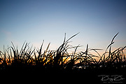 Grass under sunset in lake at Martin Dies state park, Texas