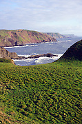 Cliffs and coastal scenery near Hartland Quay, north Devon coast, England, UK