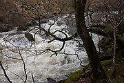 River Towy flowing fast through the landscape after rainfall near Llandovery, Wales, United Kingdom.