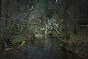 Dark forest around river Loja full with dark water and sandstone cliff face in distance, Murjāņi, Gauja National Park (Gaujas Nacionālais parks), Latvia Ⓒ Davis Ulands   davisulands.com