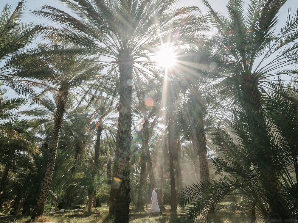 A man walks through fog in the Al Ain Oasis. It has been opened as the UAE's first curated UNESCO World Heritage site that visitor can experience. Spread over 1,200 hectares, nearly 3,000 acres, and containing more than 147,000 date palms of up to 100 different varieties, this impressive oasis is filled with palm plantations, many of which are still working farms.