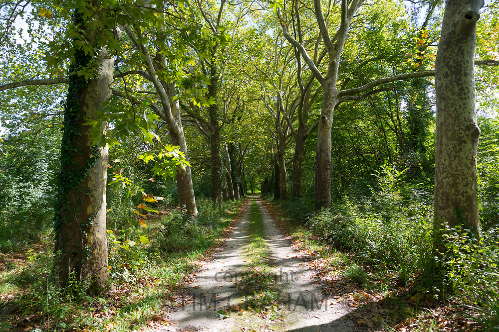 Avenue of tall plane trees and dappled sunlight form light and shade on road to nowhere in Aquitaine France