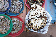 Fish and hornet larvae for sale at Don Makai evening market in the outskirts of Vientiane, Lao PDR. A large variety of local products are available for sale in fresh markets all over Laos, all being sold on small individual stalls.