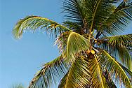 """Kuna Yala es una comarca indígena en Panamá, habitada por la etnia kuna. Antiguamente la comarca se llamaba San Blas. Su capital es El Porvenir. Limita al norte con el Mar Caribe, al sur con la provincia de Darién y la comarca Emberá Wounnan, al este con Colombia y al oeste con la provincia de Colón..Kuna Yala en lengua kuna significa """"Tierra Kuna""""..La Economía de la Comarca de Kuna Yala se dedica principalmente a la agricultura, pesca, producción de artesanías, y al turismo.©Daniel Ho/ Istmophoto.com"""